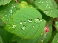 Rainday1
